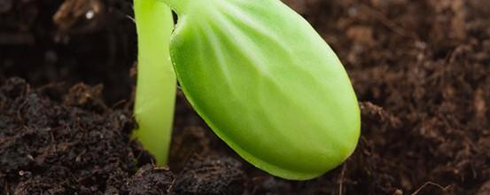 Frugtbarhed – Fra gudinder til livsstilsfaktorer