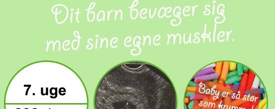 Gravid uge 6 – Embryo bevæger sig